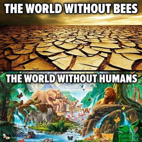 The world without bees and without man.jpg